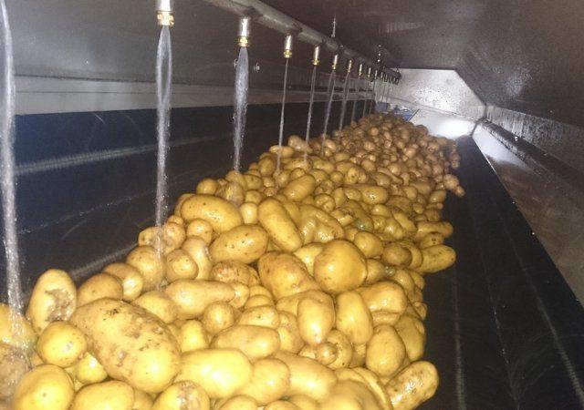 Kartoffelwaschmaschine