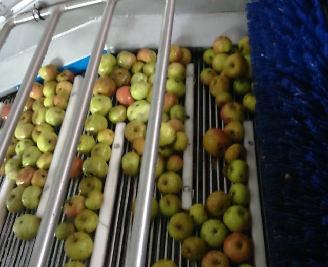 Waschmaschine für Obst