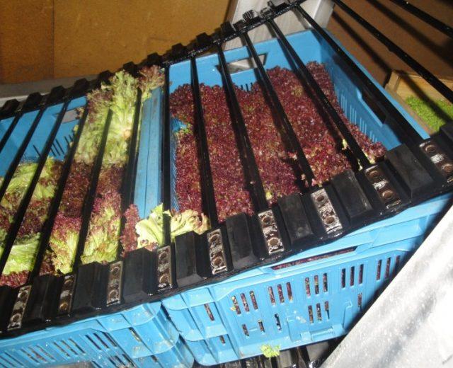 Salattauchbecken