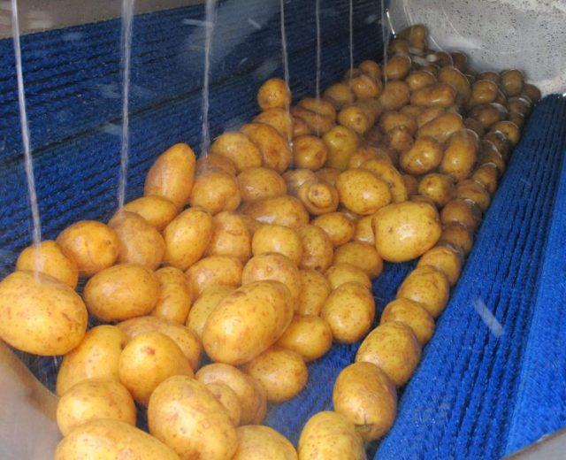 Bürstenwaschmaschine zum bürsten von Kartoffeln
