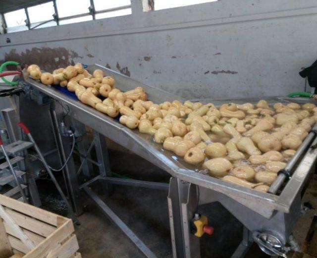 Gemüse-Wasch-Sorierer