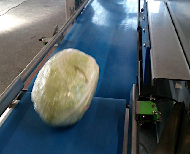 Gemüse Wieg-Sortier-Anlage