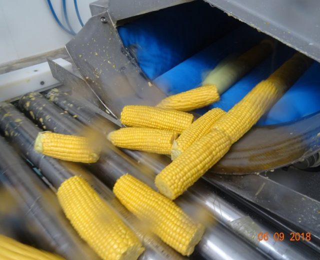 Maiswaschmaschine mit Mais