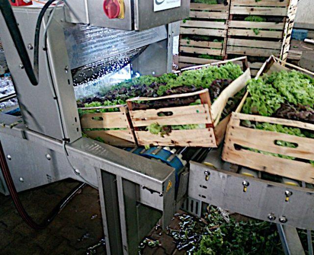 Salatwaschanlage