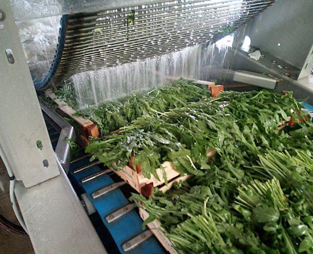 Feldsalat in der Waschmaschine